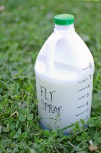 The BEST homemade fly spray made with natural and organic ingredients. The best part? It really works!
