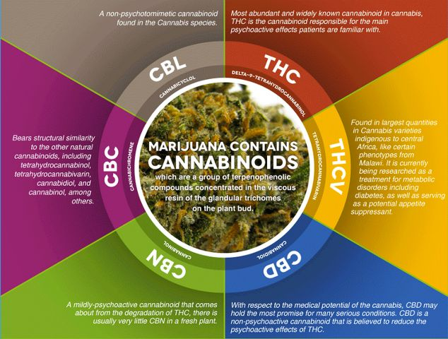 Israeli Cannabis Study: Natural Cannabinoids Provide More Complete Pain Relief for Cancer Symptoms