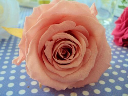 VASE CUBE & sa ROSE DOUCEUR fleur naturelle éternelle stabilisée