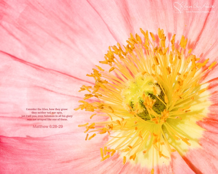 spring wallpaper with bible - photo #9