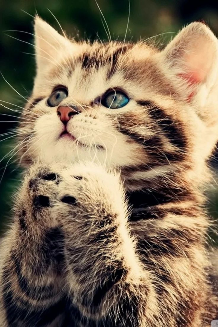 Praying Kitty!