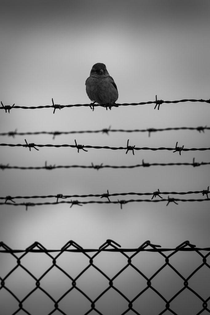 177 besten B & W ...(behind) grid Bilder auf Pinterest | Fotografie ...