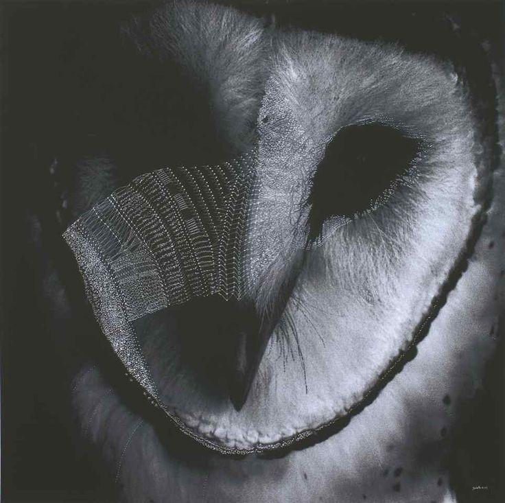 Prayer Owl - Morning Bay by Joshua Yeldham