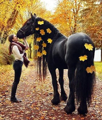 Autumn Friesian