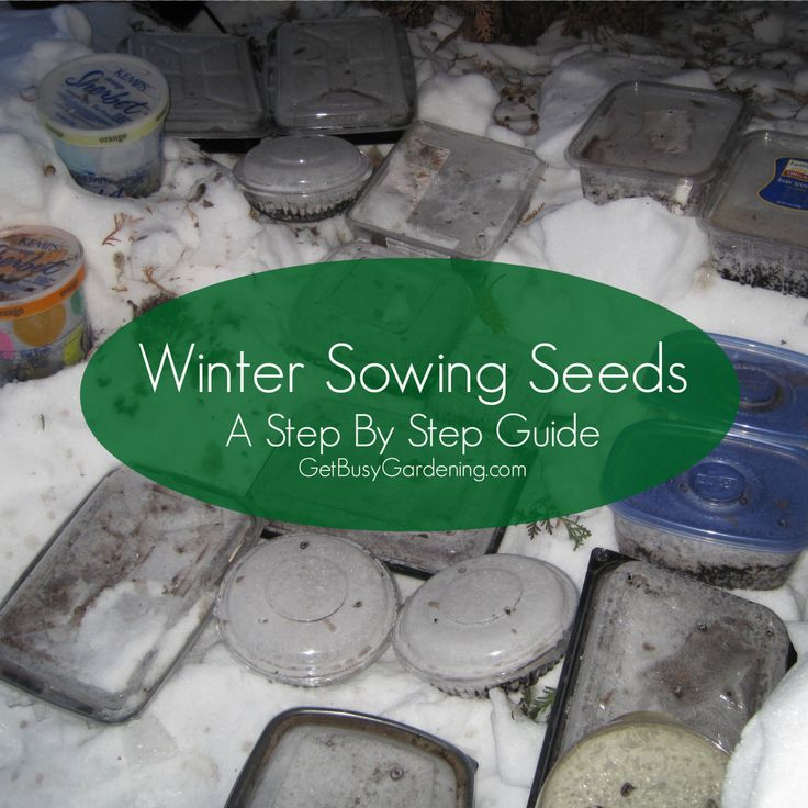 17 best images about winter sowing on pinterest gardens gardening zones and how to plant lettuce - A step by step guide to renovating an apartment ...