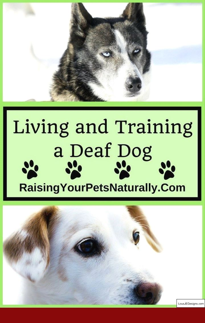 How To Train Your Dog Cool Tricks And Pics Of How To Train Your