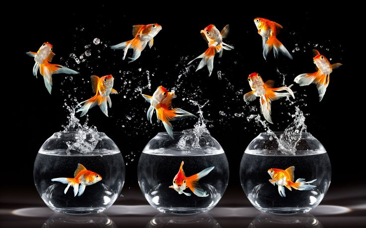 Did you know we provide aquariums on rent, including food for the fish & the maintenance? -