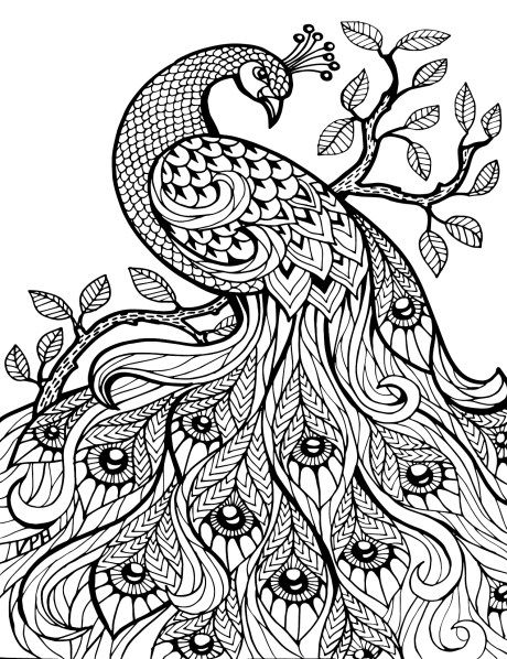 Adult Coloring Pages: Peacock 2                              …