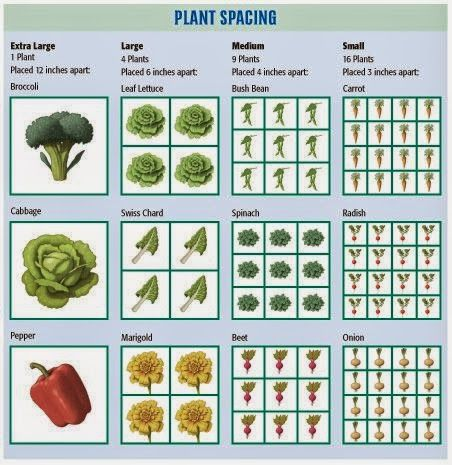 Square Foot Gardening Plant Spacing - Beautiful Home and Garden