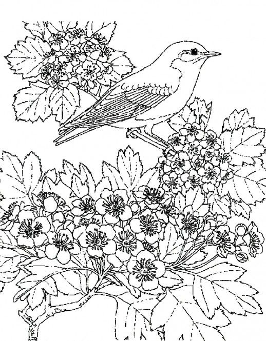 scenic coloring pages coloringpagesanimal