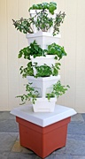 Welcome to Alegría Fresh… Locally-grown, Naturally!  Selling Verti-Gro home hydroponics