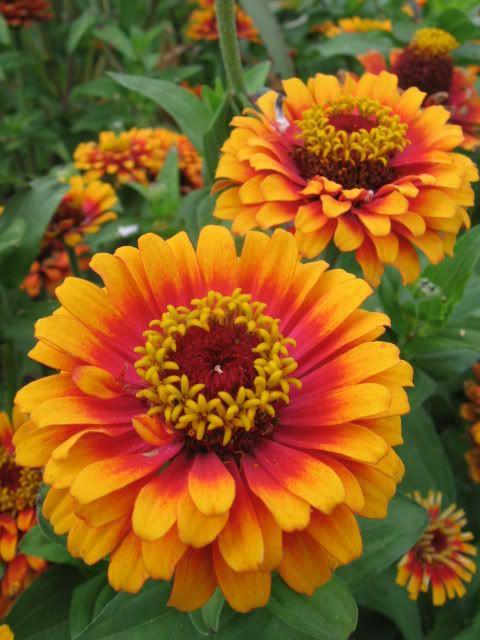 Common Yellow Garden Flowers 320 best garden delights-yellow garden images on pinterest