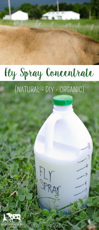 The BEST Homemade Fly Spray (It really works!!!) for cows, horses, even dogs. Made with apple cider vinegar and essential oils, no harsh chemicals.: