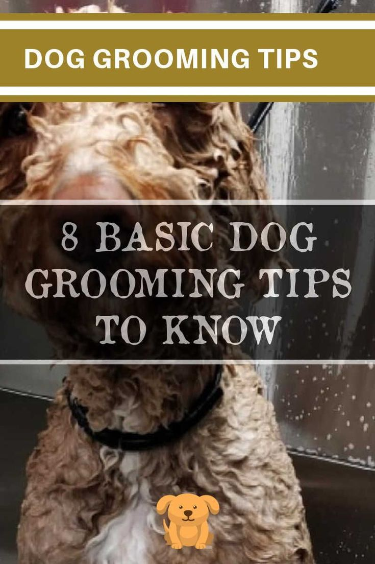 Dog Grooming Tips Techniques And Bathing Methods Pet Grooming