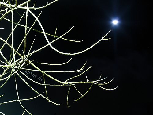 Dark Moon Tree on Night Sky / Magic Fantasy Space, by epSos.de. The picture is licensed under the Creative Commons License 3.0. The original image is at http://www.flickr.com/photos/epsos/3406617569/