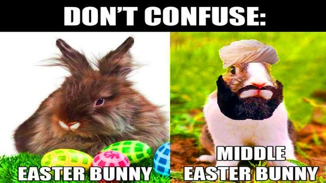 Easter 2020 Memes Pics Gif Funny Images Download Easter Humor Easter Bunny Pictures Funny Easter Bunny