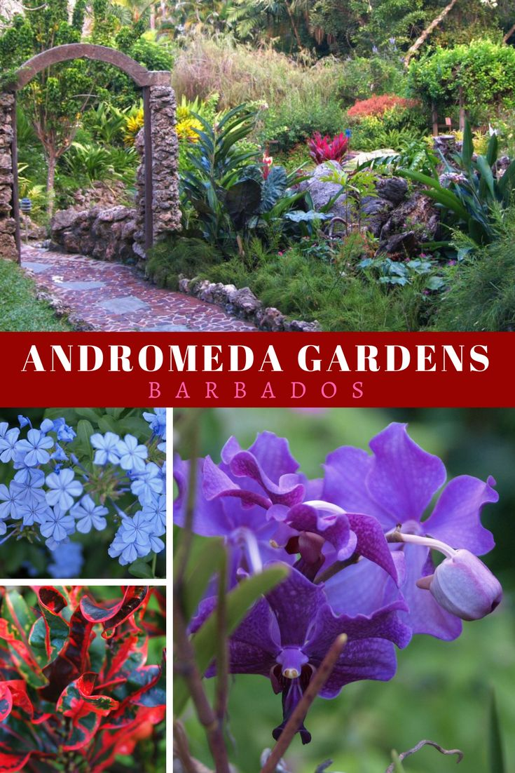Andromeda Gardens, one of the stunning tropical gardens to explore when you visit Barbados...