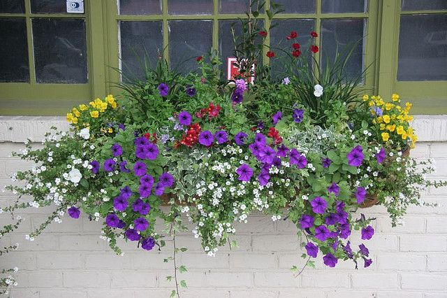 This is going to be my window box this spring