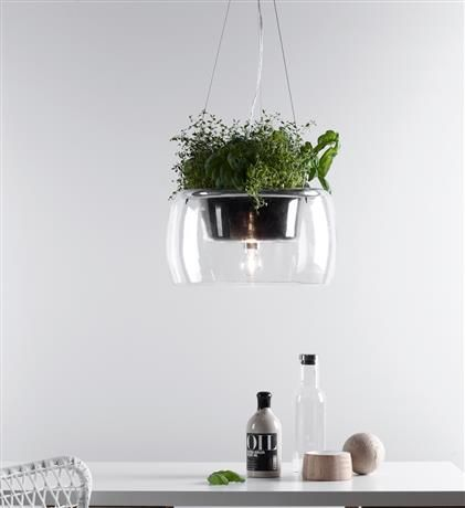 MLG - Product Standard Item - PLANT Pendant 1L Clear