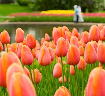 59 best images about pella on pinterest gardens wooden for What season are tulips