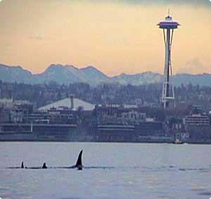 Puget Sound, Seattle visit Lori & my cousins Joe & Bill Pick