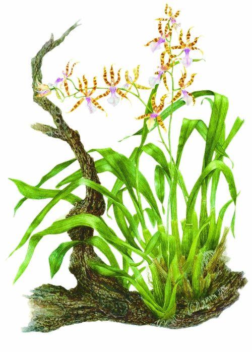 693 best images about botanical ilustration on pinterest - Estantes para plantas ...