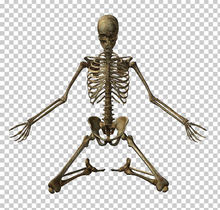 Human Skeleton Bone Skull Png 3d Rendering Anatomy Bone Fantasy Human Body Human Skeleton Bones Skeleton Bones Human Skeleton