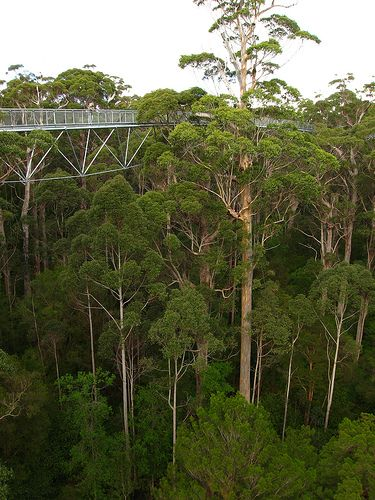 Tree Top Walk - Valley of the Giants | Western Australia