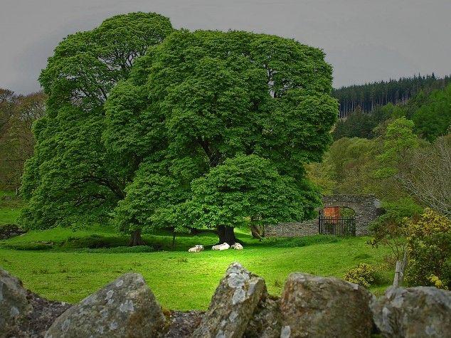 iers landschap (gemaakt in Ierland)