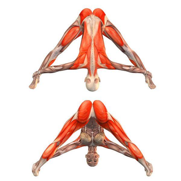 Wide-legged forward bend with feet grab - Prasarita Paddotanasana plus - Yoga Poses | YOGA.com