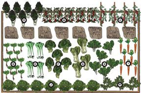Kitchen Garden Design Plans designed to maximize space for a succession of tasty vegetables and herbs throughout the spring, summer and fall. Each shows you what to plant, when to plant, and what crop follows another as the seasons change.