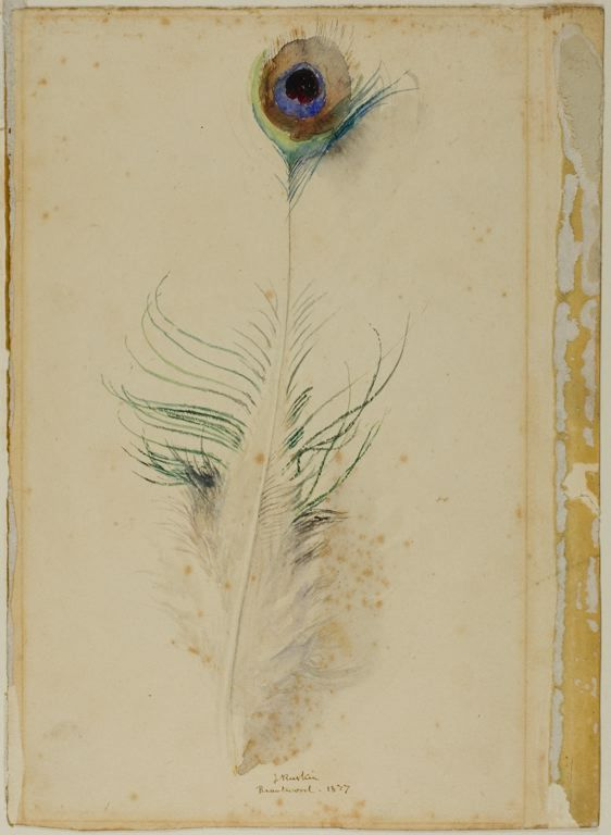 John Ruskin, Peacock Feather, 1877. Watercolour over traces of graphite. Not technically a drawing but I'd like to include it here. http://www.cavetocanvas.com/post/52900592668/john-ruskin-peacock-feather-1877