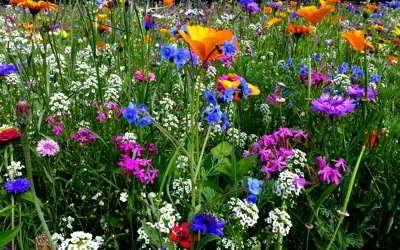 Bienenfreundliche Pflanzen auf Balkon, Terrasse und Garten – so können wir helfen