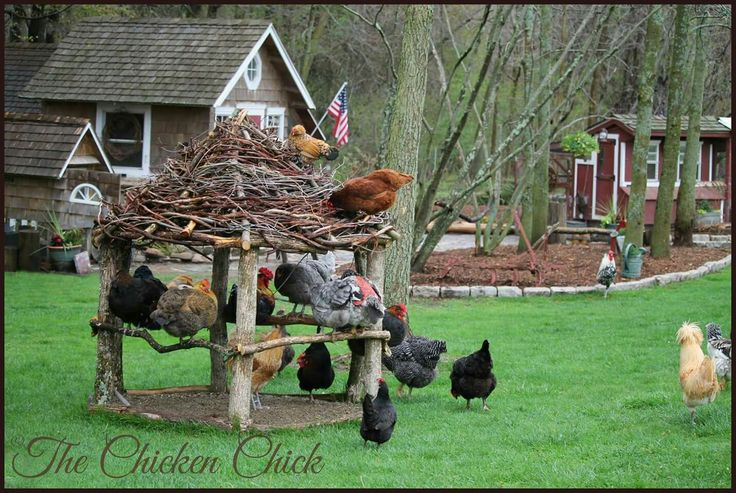 Lightening chicken gazebo