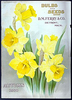 Autumn 1910 Nursey Catalogue: BULBS & SEEDS - D.M. Ferry & Co. Detroit, Michigan Daffodils http://www.sil.si.edu/digitalcollections/SeedNurseryCatalogs/CF/TL_SeedsSelectImages.cfm?subject=Daffodils