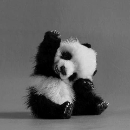 i wanna squeeze him...he's so cute. panda baby