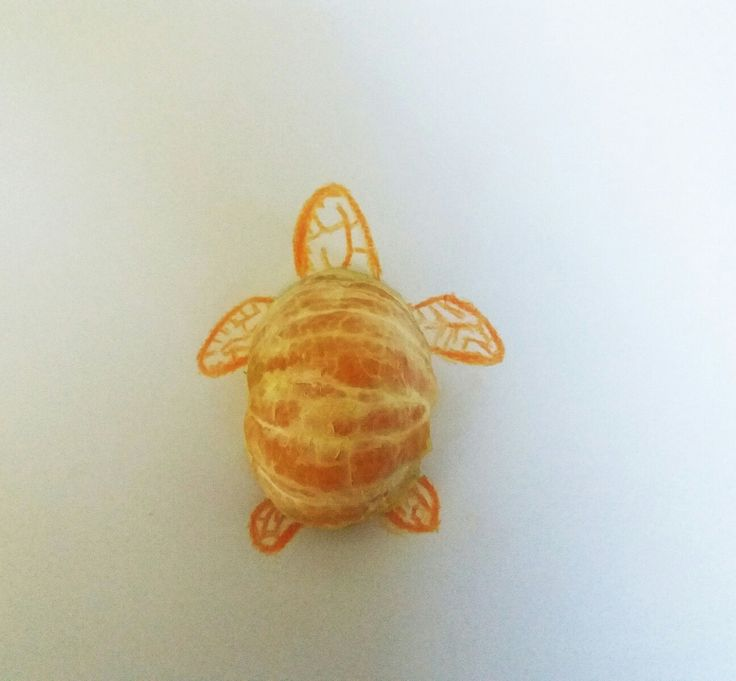 tangerine turtle...