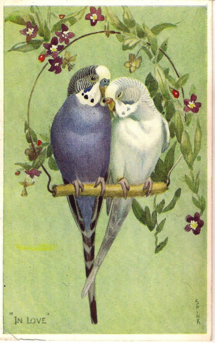 Ретро открытки с птицами, картинки