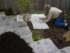 Wet newspapers and put layers around the plants overlapping as you go; cover with mulch and forget about weeds. Weeds will get through some gardening plastic; they will not get through wet newspaper. Good composting!