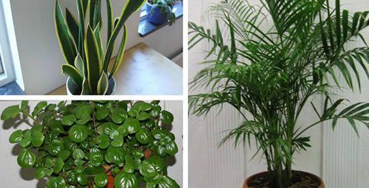 5 piante che purificano l'aria di casa | Rimedio Naturale