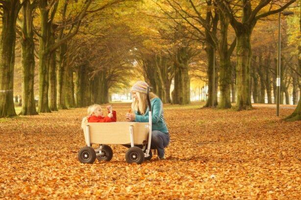 Jipfish loves autumn