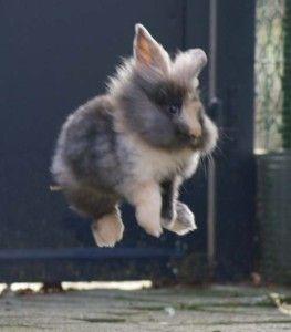 binky, rabbit binky, rabbit binkying, rabbit body language