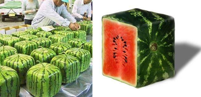 vierkante watermeloen - Google zoeken