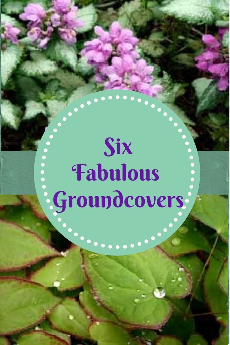 133 best images about yard ground cover paths and for Hardy low maintenance perennials