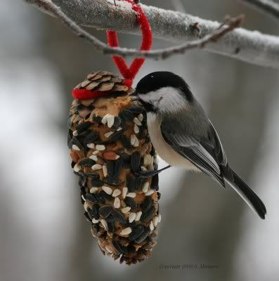 Pine cones  rolled in peanut butter, and then rolled in bird seed and hung~   Cute homemade bird feeders
