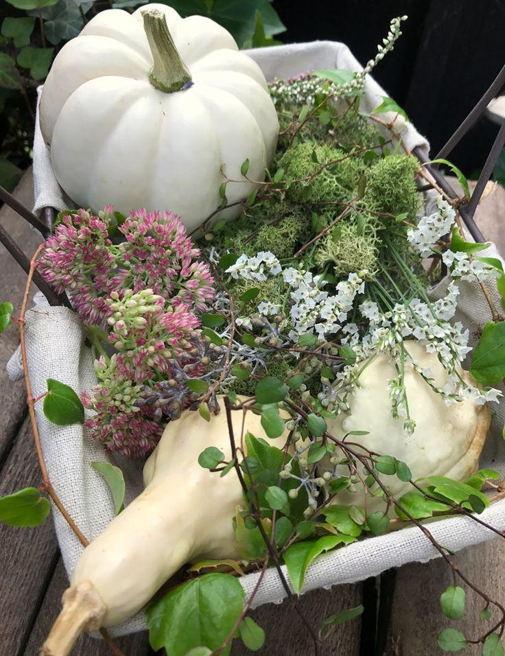 Arrangement d'automne avec citrouille blanche, mousse, vin, poule grasse et fleurs blanches.   – Deko mit Naturmaterialien