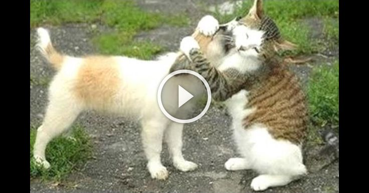 Funny Cats Meeting Cute Puppies Compilation !