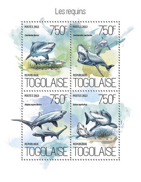TG 13818 a – Sharks, (Carcharias Taurus, Carcharodon carcharias, Alopias superciliosus, Isurus oxyrinchus).