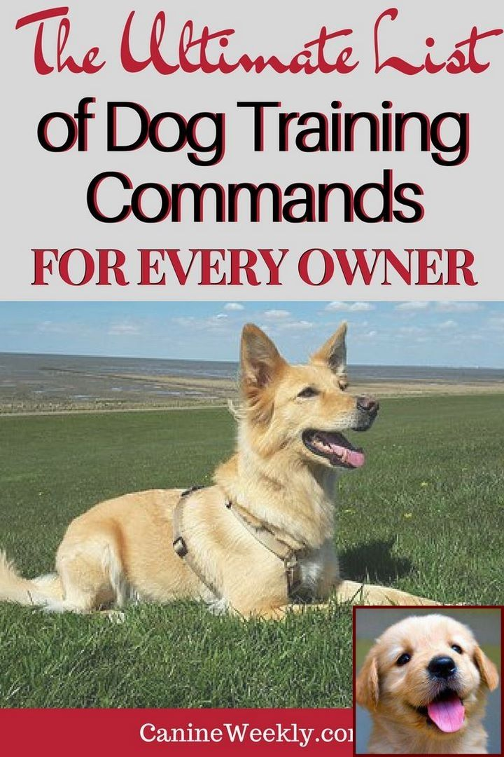 Dog Behavior Therapist And Clicker Training Bird Dogs