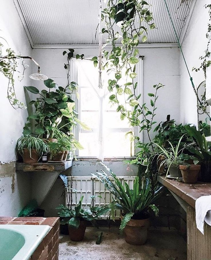 the 25+ best bathroom plants ideas on pinterest | plants in